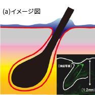(a)イメージ図